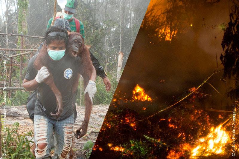 olio di palma foreste che bruciano